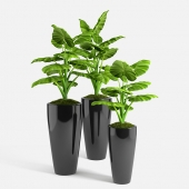 philodendron plants set