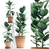 PLANTS 86