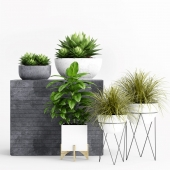 Plants and Planters _1