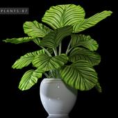 PLANTS 87
