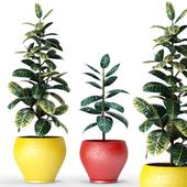 Коллекция растений в горшках 6