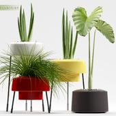PLANTS 89