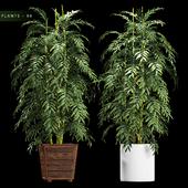PLANTS 90