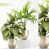 PLANTS 91