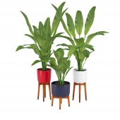 Plant in 3 variations