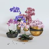 Orchids set / Сет орхидей