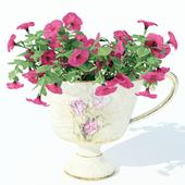 Petunia_cup