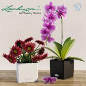 Умный вазон Lechuza Cube. Орхидея. Цветы