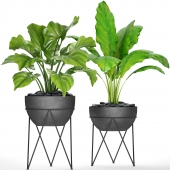 Collection of plants in pots 25