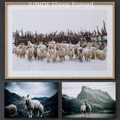 Sheep framed