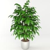 plant, комнатное растение