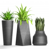 Collection of plants in pots 27