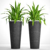 Коллекция растений. Асплениум. 28