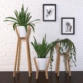 Растения - Набор 01