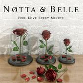 Roses Notta & Belle