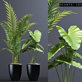 PLANTS 102