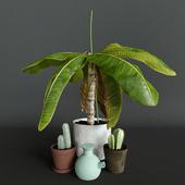 A set of plants