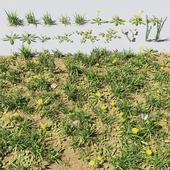 grass&plants
