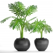 Collection of plants in pots 38