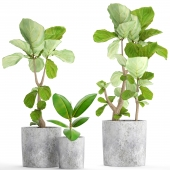 A collection of plants in pots 39. Ficus