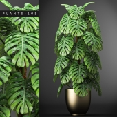 PLANTS 105