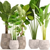 Collection of plants in pots 41