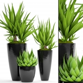Collection of plants in pots 44