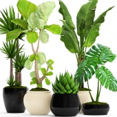 A collection of plants in pots. 45