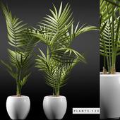 PLANTS 110