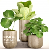 A collection of plants in pots. 49