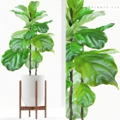 PLANTS 113