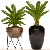 A collection of plants in pots. 54 Cycas