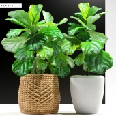 PLANTS 115