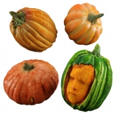 Sexy Crazy Pumpkins