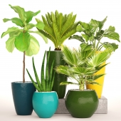 A collection of plants in pots.