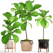 A collection of plants in pots. 57