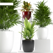 Plants 116