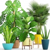 A collection of plants in pots. 62