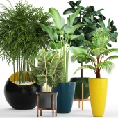 A collection of plants in pots. 63