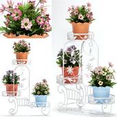Plants 118