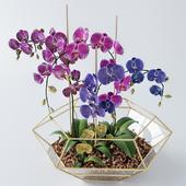 Сет орхидей