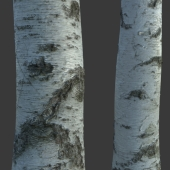Material of tree bark (photogrammetry)