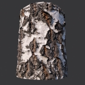 Material of birch bark (photogrammetry)