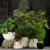 Plants collection 53