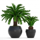 Collection of plants 72.Cycas