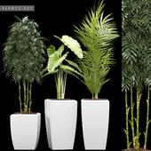PLANTS 127