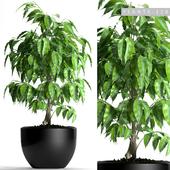PLANTS 128