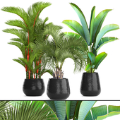 Collection of plants 84. PALMS