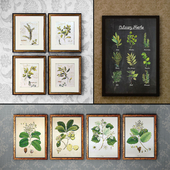 Picture in the frame 137. Plants (23 pcs.)