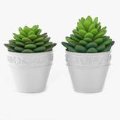 Succulents 09